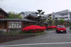 弓道場前のツツジが満開で,赤や紫の花をたくさん咲かせています。